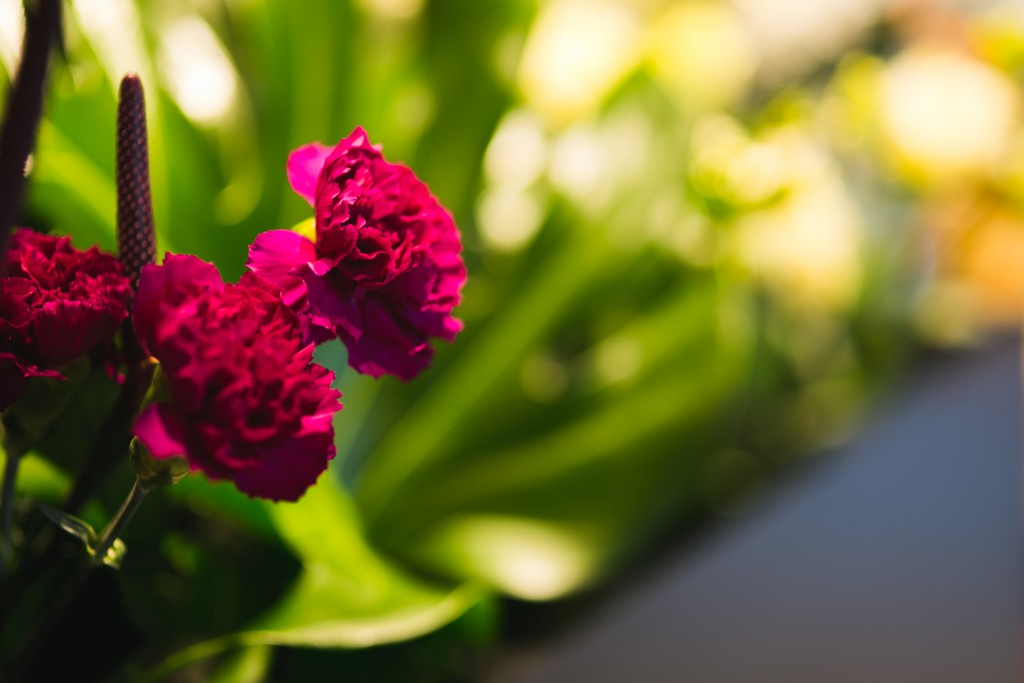 kaboompics.com_Beutiful Pink Flower